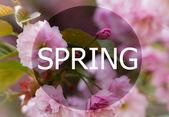 Krásné květiny kvetoucí růžová sakura