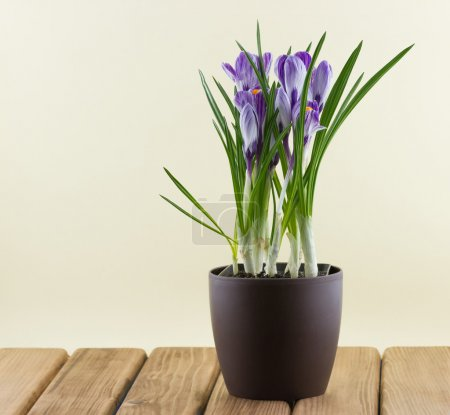 flowers in a pot on wooden
