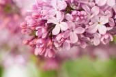 Květy v botanické zahradě