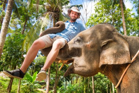Photo for Domesticated elephant lifting a tourist with his trunk. - Royalty Free Image