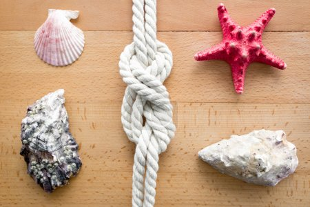 Foto de Closeup shot of seashells, starfish and knot from sailing travels - Imagen libre de derechos