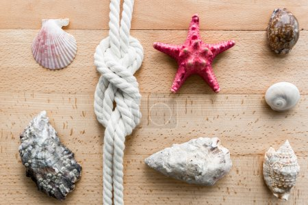 Closeup of seashells, starfish and marine knot lying on boards
