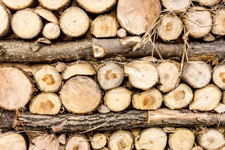 Photo for Closeup shot of stacked freshly cut wooden logs - Royalty Free Image