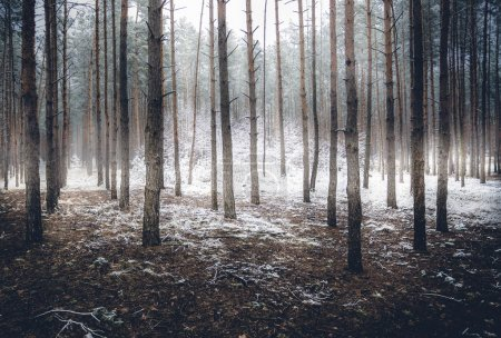 spooky winter forest covered by mist