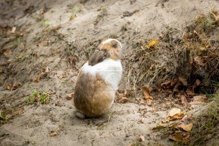 little rabbit sitting next to hole in ground