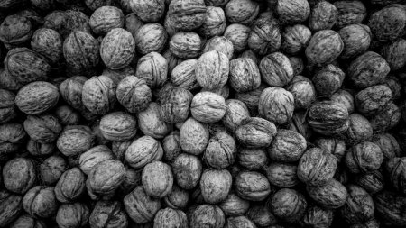 Black and white texture of raw walnuts in shells