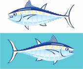 Yellow fin Tuna Vector stylized