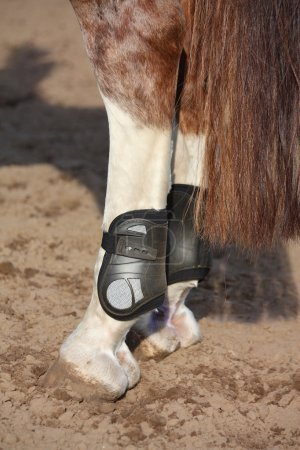 Close up of horse hind legs with boots