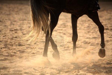 Trotting away horse legs close up