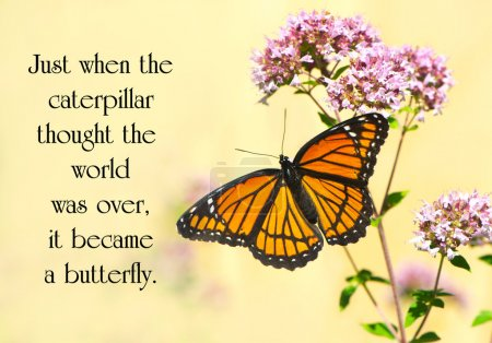 Photo for Inspirational quote on life by an unknown author with a pretty monarch butterfly perched at a flower. - Royalty Free Image