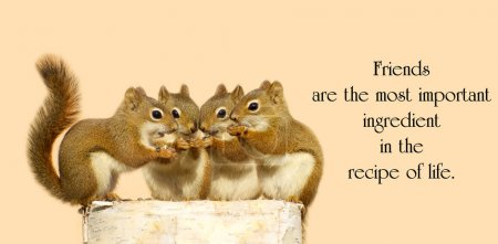 Photo for Inspirational quote on friendship by Dior Yamasaki with four little squirrels sharing seeds. - Royalty Free Image