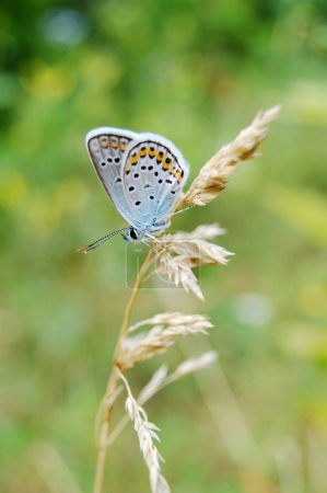 Beautiful blue butterfly of