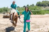 Tierarzt Pferde auf dem Hof