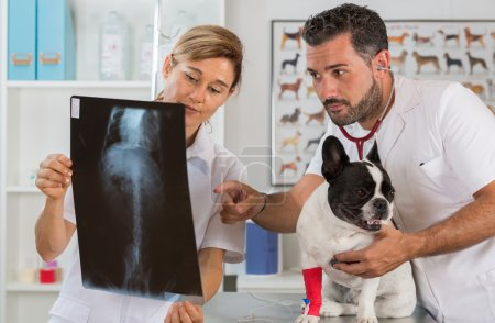 Couple reviewing veterinary radiography
