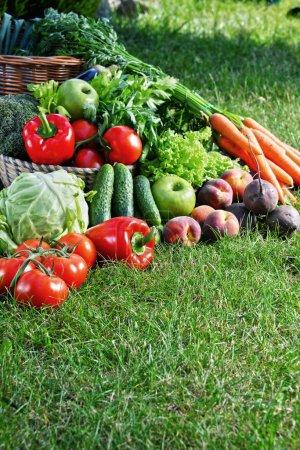 Photo pour Variété de légumes biologiques frais et de fruits dans le jardin. Alimentation équilibrée - image libre de droit