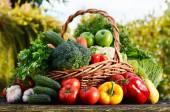 """Постер, картина, фотообои """"плетеная корзина с различными сырыми органическими овощами в саду"""""""