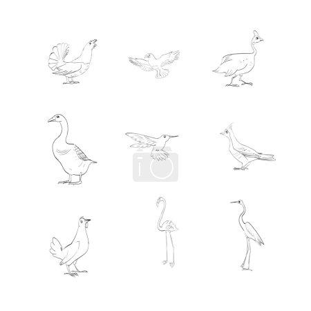flamingos, geese, birds, vector