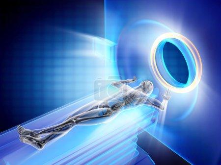 Mri examination of human bones