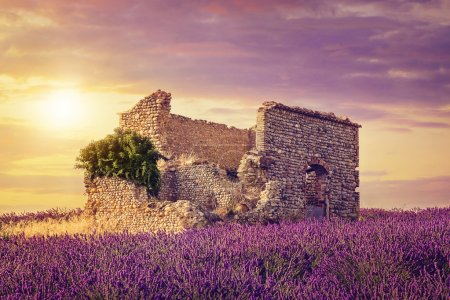 Photo for Lavender field at sunset, Provence - Royalty Free Image