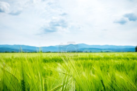 Photo for Bright green grass field and mountains - Royalty Free Image