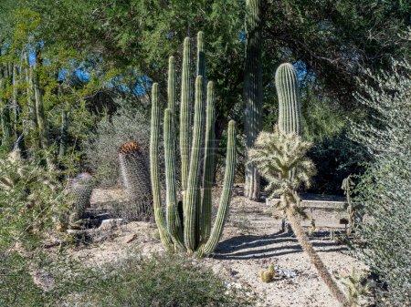 Various cactus varieties