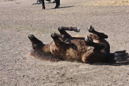 Horses resting after race