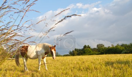 Horse in denmark and blue sky