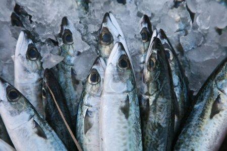 Photo pour Poisson frais sur le marché aux poissons en Grèce . - image libre de droit