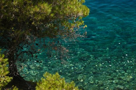 Photo for Trees at the coast line in   Peloponese in Greece - Royalty Free Image