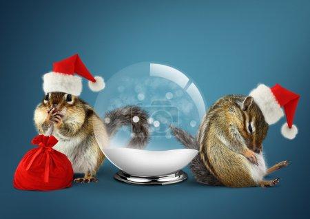 Funny animals chipmunks dress santa