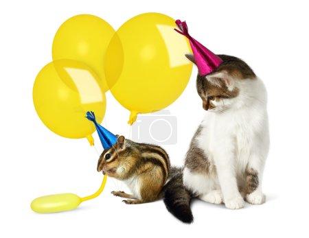 Photo pour Concept anniversaire, drôle de chat et tamias avec ballons sur blanc - image libre de droit