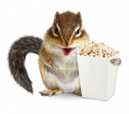 Funny animal chipmunk with blank popcorn bucket isolated on whit