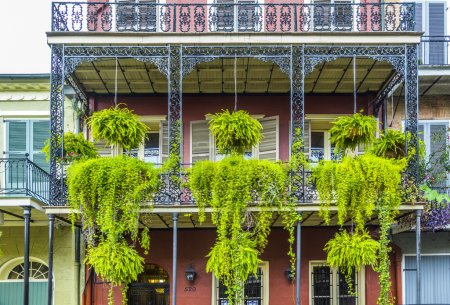 Balcony with green flowers in the old part of New Orleans