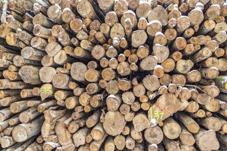 Photo pour Pile de troncs en hiver avec des marques pour identifier - image libre de droit