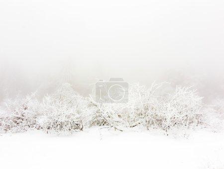 Photo pour Plantes gelées dans la neige devant un blizzard dans les montagnes - image libre de droit