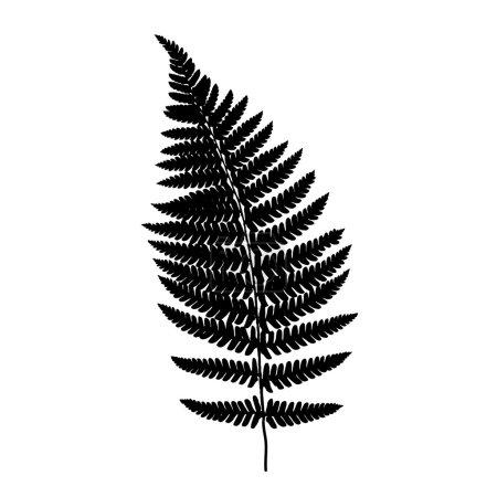 Fern frond balck silhouette