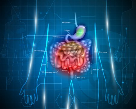 Gastrointestinal tract abstract background