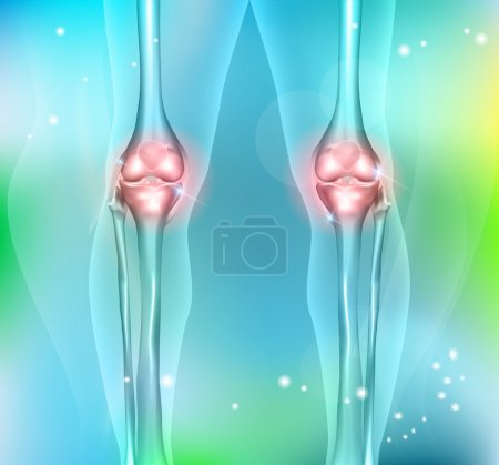 Healthy human leg knee joints