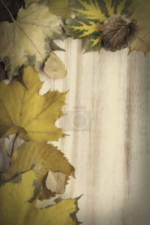 autumn classified on the tree with leaf frame for words and insc
