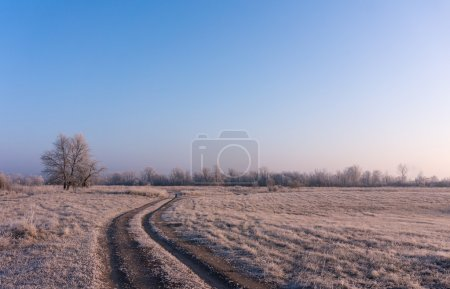 winter landscape of the first frost, frost on trees, morning sun