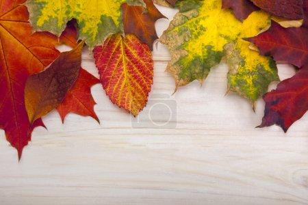 Photo pour Automne classé sur l'arbre avec cadre de feuille pour les mots et les inscriptions, espace de copie, (vue du dessus ) - image libre de droit