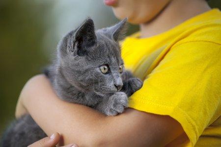 kitten on the arm of the boy