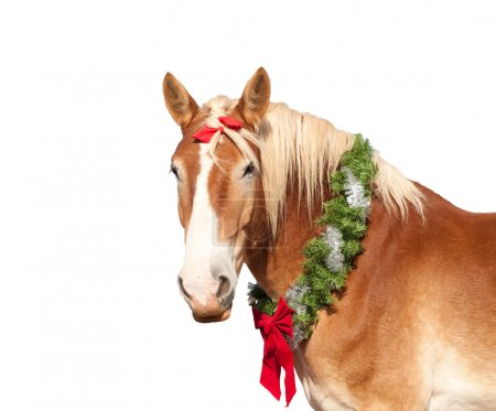 Belgian Draft horse with a Christmas wreath lookin...