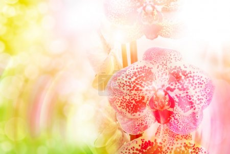 Photo for Close up of beautiful plant orchid flower - Royalty Free Image