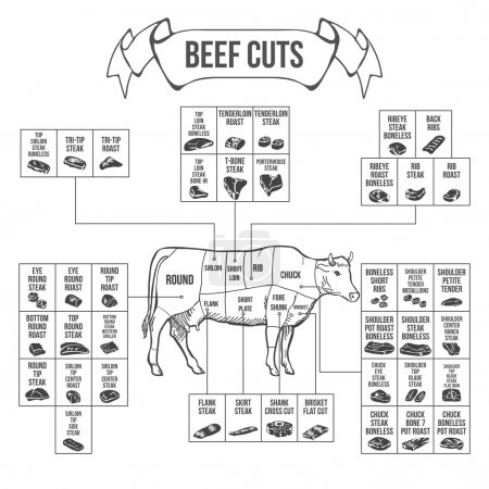 Scheme of Beef cuts for steak and roast. Vector