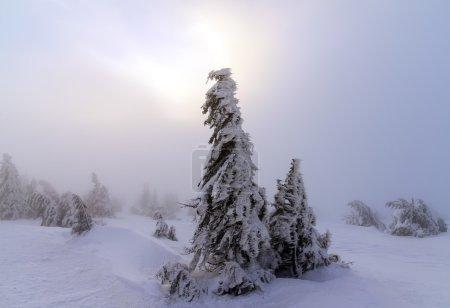 Winter landscape. Sunrise in the mountains. Beautiful World. Christmas scene. Carpathians, Ukraine, Europe