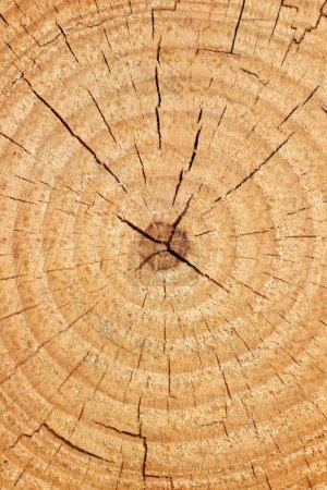 Photo pour Fond d'arbre - image libre de droit