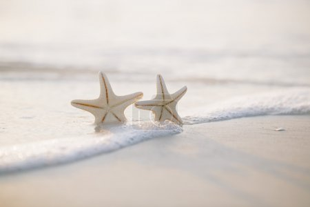 Two starfish on sea ocean beach