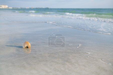 nautilus shell on a sea ocean beach