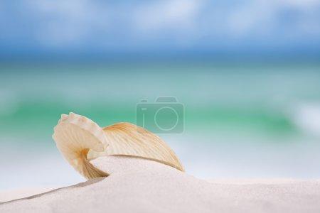Photo pour Coquille de papier nautilus sur la plage de sable blanc sous la lumière du soleil, peu profonde dof - image libre de droit